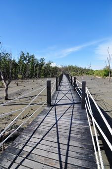 The Bridge At Mangrove Forest Stock Photo