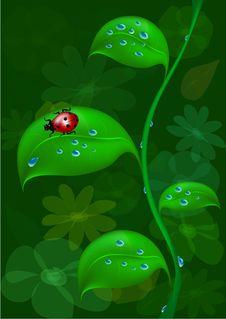 Free Ladybug On Stalk Royalty Free Stock Photography - 21126757