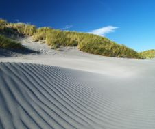 Free Grass And Sand Dunes Royalty Free Stock Photos - 21126868