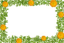 Free Green Plant Frame With Yellow Flowers Stock Photo - 21127050