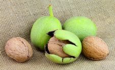 Free Young Walnuts Stock Images - 21127364