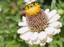 Free Single White Flower On Green Background Stock Image - 21127411