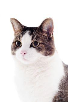 Free Cat In Studio Stock Image - 21129901