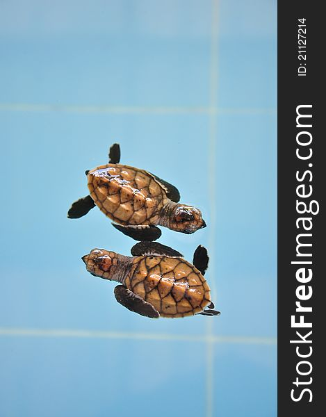 Two turtle