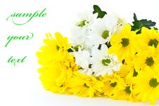 Free Beautiful Bouquet Of Yellow Chrysanthemums Royalty Free Stock Photo - 21130205