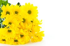 Free Beautiful Bouquet Of Yellow Chrysanthemums Royalty Free Stock Photo - 21130325