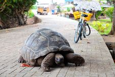 Free Giant Tortoise On A Road Stock Photos - 21130733