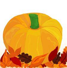 Free Single Orange Pumpkin Stock Photos - 21131283