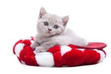Free British Kitten In Red Hat Royalty Free Stock Photo - 21131335