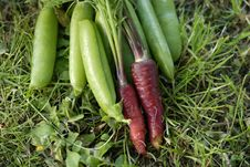 Free Bunch Of Red Dragon Carrots. Royalty Free Stock Images - 21132019