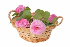 Free Pink Roses In The Basket Stock Image - 21132941