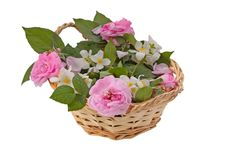 Free Pink Roses In The Basket Royalty Free Stock Photography - 21133057