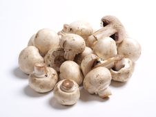 Free White Champignons Royalty Free Stock Photos - 21133418