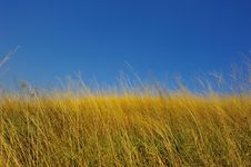 Free Yellow Grass With Blue Sky Stock Photos - 21134133