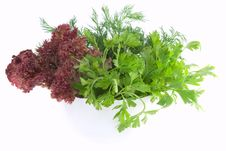 Free Fresh Parsley, Dill And Lettuce In Bowl On White Stock Images - 21135014