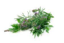 Free Fresh Herbs Stock Image - 21136671