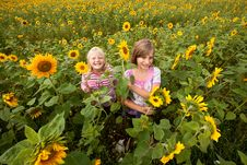 Free Girls Surrounded Of Sunflowers Royalty Free Stock Photo - 21136725