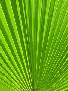 Free Optical Palm Stock Image - 21139431
