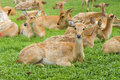 Free Deer Stock Images - 21140474