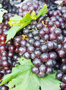 Free Fresh Grape Cluster With Green Leaf Stock Photo - 21141300