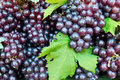 Free Fresh Grape Cluster With Green Leaf Royalty Free Stock Photos - 21141338