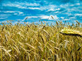 Free Wheat Royalty Free Stock Photo - 21142205