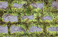 Free Moss And Stones Royalty Free Stock Photo - 21142625
