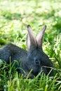 Free Little Mammal Rabbit Stock Image - 21143151