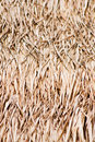 Free Close Up Of Ground. Texture Of Straw Royalty Free Stock Image - 21146486