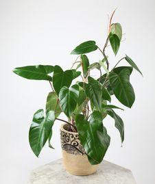 Ornamental Plants Stock Photography