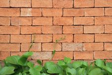 Free Brick Wall With Climbing Plants Royalty Free Stock Image - 21141386