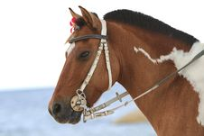 Free Horse On The Beach Royalty Free Stock Images - 21141429
