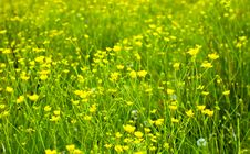 Free Bright Flowers Royalty Free Stock Image - 21142046