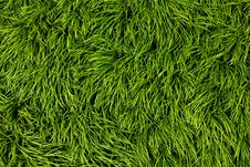Free Green Grass Royalty Free Stock Photo - 21142185