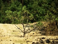 Free Small Tree In The Field Stock Image - 21142221