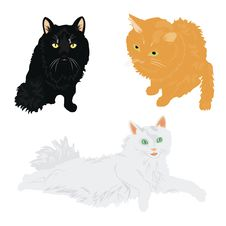Free Much Cats Of The Miscellaneous Of The Colour Royalty Free Stock Photos - 21143258