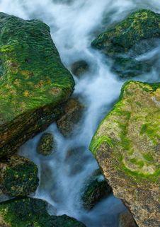 Rocks And Weed At Sea Coast Stock Photography