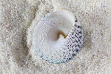 Free Conch On Sand Stock Photography - 21143752