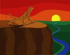 Lioness Meets Sunset Stock Images