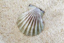 Free Clam On Sand Stock Photo - 21143810