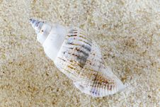 Free Conch On Sand Royalty Free Stock Photography - 21143877