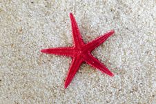 Free Sea-star On Sand Royalty Free Stock Photography - 21143927