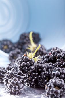 Free Blackberries Royalty Free Stock Photos - 21144868
