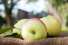 Free Organic Apples In The Garden Royalty Free Stock Images - 21145169