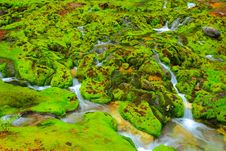 Free Green Moss With Water Stream Royalty Free Stock Image - 21145266
