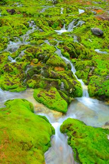 Free Green Moss With Water Stream Stock Photography - 21145432