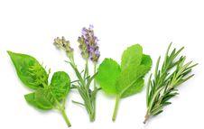 Free Herb Royalty Free Stock Photos - 21146328