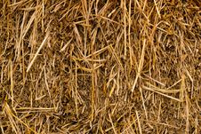 Free Close Up Of Ground. Texture Of Straw Stock Photo - 21147250