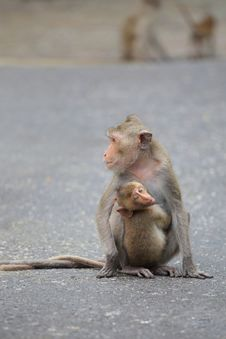 Free Little Monkey Hug On Mom Stock Photos - 21148233
