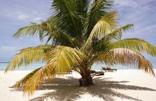 Free Palm Tree On A Sandy Beach Royalty Free Stock Photos - 21149368
